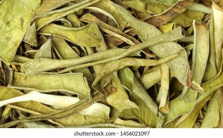 Chinese herbal medicine - aloe vera