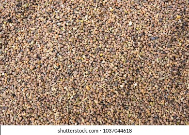Chinese herbal medicine, Chinese Dodder Seed or Cuscuta seed or Beggar weed (Tu Si Zi), isolated on white background
