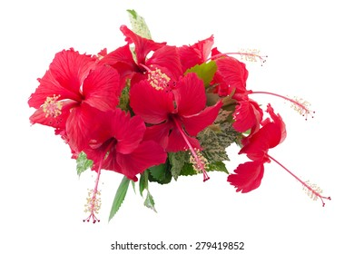 Chinese hibiscus or 'China Rose' flower, isolated on white background and clipping path