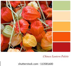 Chinese Lantern plant background colour palette with complimentary swatches.
