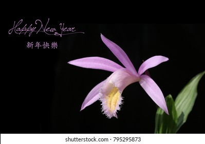 Chinese New Year background with Flower