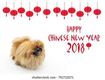Chinese New Year background with Pekingese