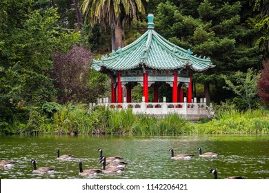 The Chinese Pavilion on the shoreline of Stow Lake; a group of Canada geese swimming on the lake, Golden Gate park, San Francisco, California