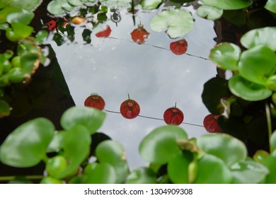 Chinese red lantern reflected on a water surface