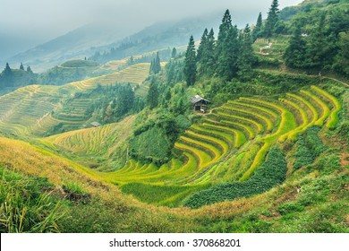 Chinese rice terraces near Guilin
