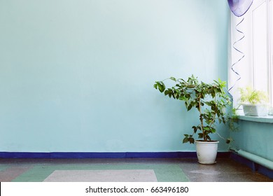 Chinese rose leafs on blue background. Corridor in the school
