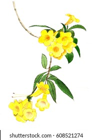 Yellow bell flower images stock photos vectors shutterstock chinese traditional brushwork ink painting gold wind bell flowertabebuia mightylinksfo