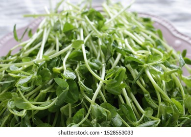 Chinese vegetable, pea sprouts on dish