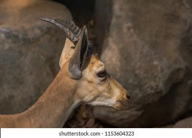 Indian White Deer Images, Stock Photos & Vectors | Shutterstock