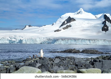 A chinstrap penguin takes in the sunshine in the South Shetland Islands, Antarctica.