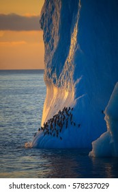 Chinstrap penguins resting on skyscraper-shaped iceberg, photographed in midnight sun in Antarctica.