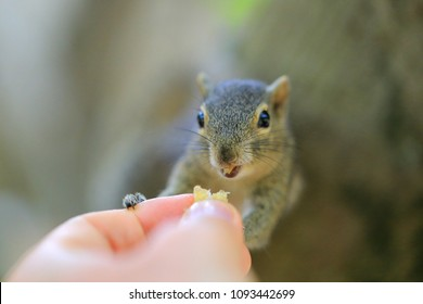Chipmunk is eating from hands