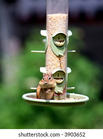 chipmunk feeding in bird feeder