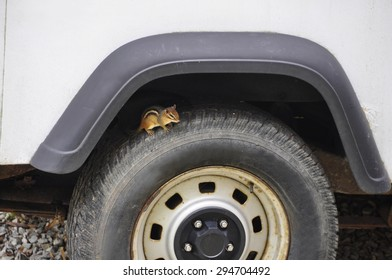 chipmunk hiding in wheel well on tire