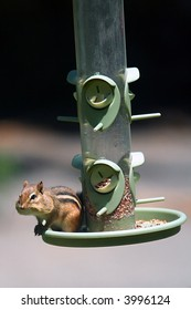 Chipmunk on a Bird Feeder