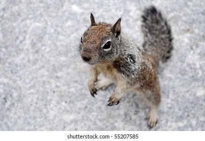Chipmunk on hind legs
