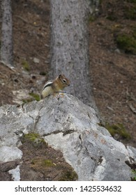 chipmunk on a rock Grassi Lake Canmore Rocky Mountains Alberta Canada August