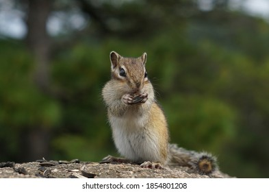 a Chipmunk stands on its hind legs and eats seeds