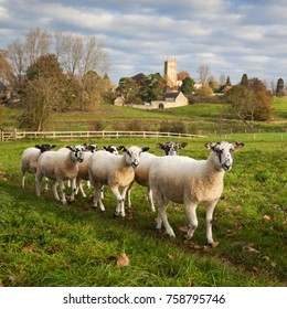 CHIPPING CAMPDEN, COTSWOLD DISTRICT, GLOUCESTERSHIRE, ENGLAND - NOVEMBER 03, 2017: Flock of white sheep walking in line along path in field below St James' church