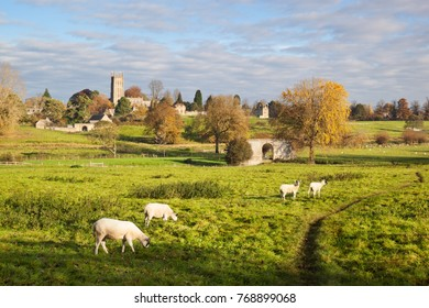 CHIPPING CAMPDEN, COTSWOLDS DISTRICT, GLOUCESTERSHIRE, ENGLAND - NOVEMBER 03, 2017: Sheep grazing in field below St James' church and ruins of Campden House in autumn