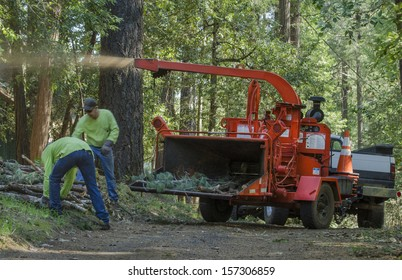 Chipping forest debris. A Northern California program to help prevent forest fires by clearing winter's accumulation of fallen limbs and trees in the Sierra foothills.
