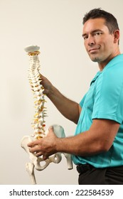 A Chiropractor showing a model of the human spine