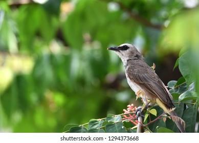Birds Chirping Images, Stock Photos & Vectors   Shutterstock