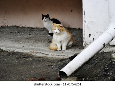 CHISINAU, MOLDOVA – stray cats in the streets of chisinau