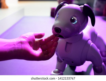 CHISINAU, MOLDOVA-5 MARCH, 2019: exhibition of robots and engineering creations, a small robot dog