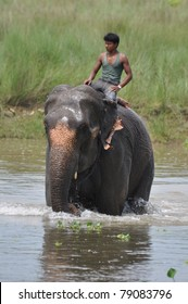 CHITWAN NATIONAL PARK, SAURAHA, NEPAL MAY 2011: Unidentified man seats on bathing Asian Elephant (Proboscidea Elephas maximus) 19 May. 2011 in Chitwan National Park river, Nepal.