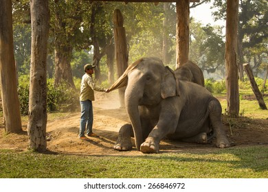 CHITWAN, NEPAL - NOVEMBER 23, 2014: Man cleaning elephant from dust in Chitwan National Park. Chitwan National Park was established in 1973 and granted the status of a World Heritage