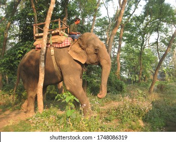 Chitwan, Nepal - November 8 2018 : Elephant rider riding an Elephant in Chitwan National Park