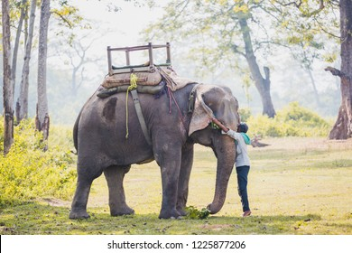 Chitwan ,Nepal - Oct 23,2018 : Elephant Keeper - Mahout With a big elehpant  in Chitwan National park,Nepal.