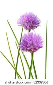 Chive flower and leaf isolated on white background