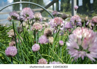 Chive Images, Stock Photos & Vectors | Shutterstock