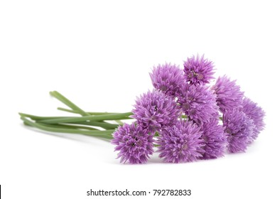Chives  Flowers bouquet isolated on white background