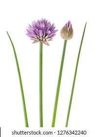 Chives  Flowers isolated on white background