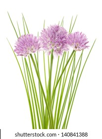 Chives flowers isolated on white