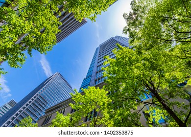 """CHIYODA, TOKYO / JAPAN - MAY 5 2019 : The scenery of """"Marunouchi Nakadori Avenue"""" where the young leaves of Zelkova are beautiful. There are many office buildings and brand shops."""