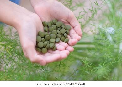 chlorella tablets in hands