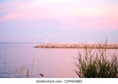 Chloris gayana (Rhodes grass) blowimg in the wind with rock fill-dam and blurred photo of lighthouse near the sea backgrounds pastel color. Beautiful natural background.Selective focus.