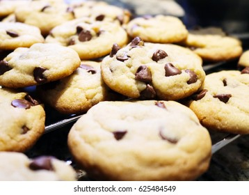 Chocolate Chip Cookie Sheet Fresh from the Oven