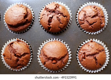 Chocolate Chocolate Chip Muffins in Baking Tray