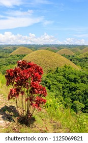 Chocolate Hills in Bohol, Philippines