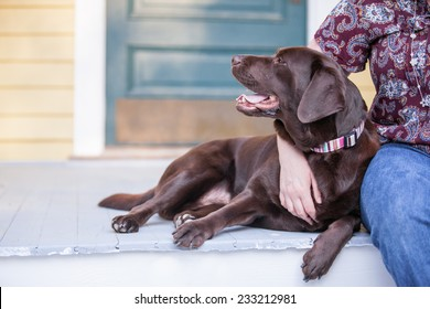 Chocolate lab dog sits on the porch with owner