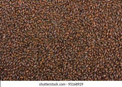 Chocolate malt barley, an ingredient for beer.