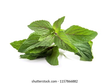 Chocolate Mint's fresh leaves at isolated on white background