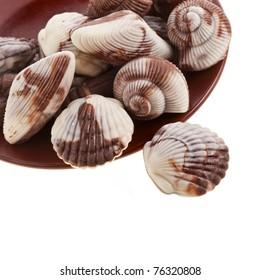 chocolate seashells isolated on white