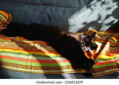 A chocolate-colored cat sleeps on a striped blanket. The sun warms the cat and sunspots are reflected on the sofa. Brown cat sleeping on the couch. Relaxed and stretched his paws.