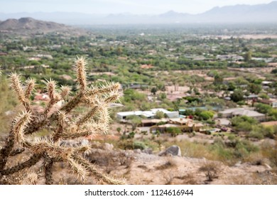 Cholla cactus and cityscape view from Camelback mountain in Scottsdale, Arizona
